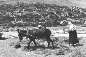 DRUZE VILLAGERS THRESHING CORN AT MAJDAL SHAMS    VILLAGE ON THE SLOPES OF THE GOLAN MOUNTAINS.